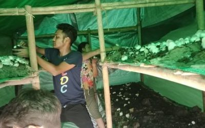 Young Lives Yangon Starts Mushroom farming